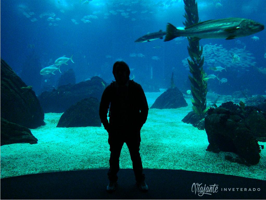 o que fazer em lisboa oceanario de lisboa