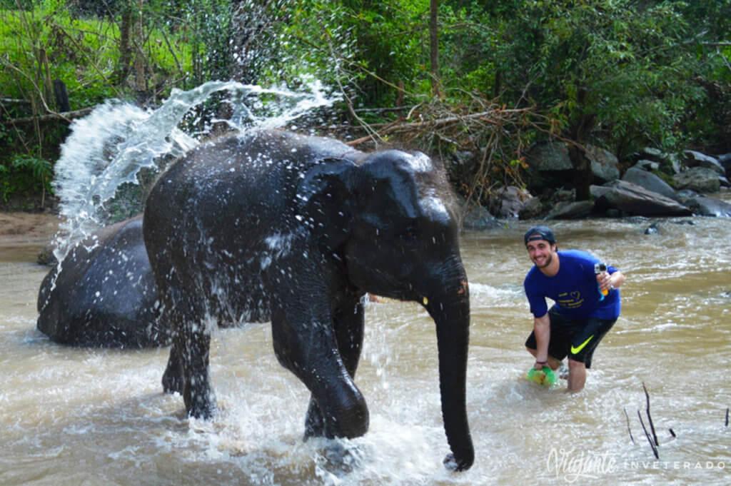 elefantes em chiang mai elephant sanctuary