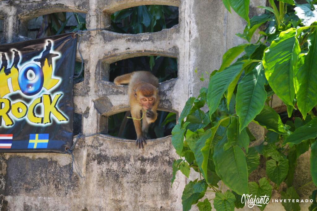 macacos em railay