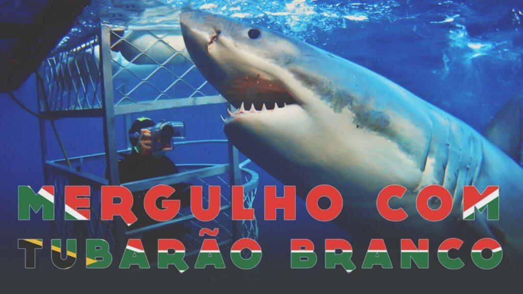 mergulho com tubarão branco na África do Sul